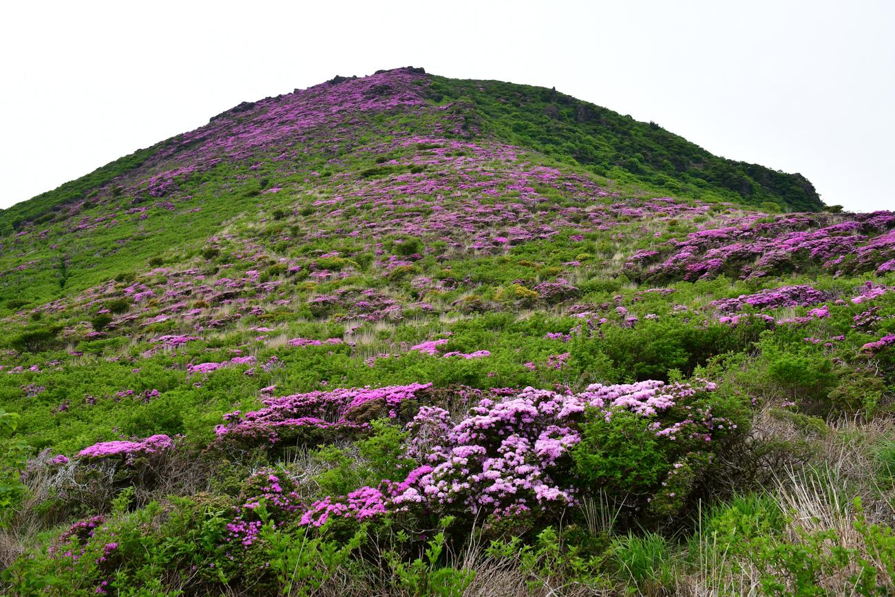 九重山・平治岳 ミヤマキリシマ登山